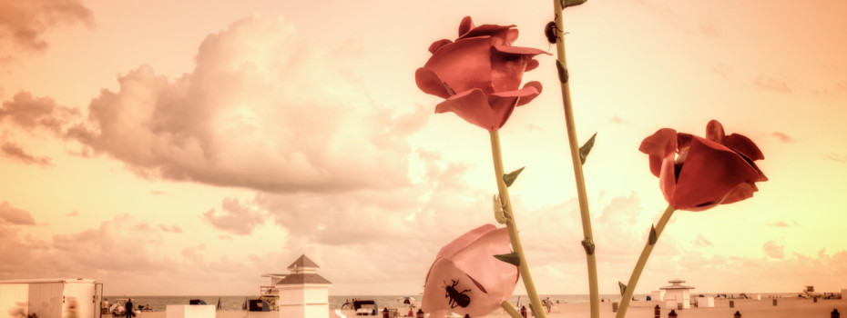 Polluted Roses At The Beach