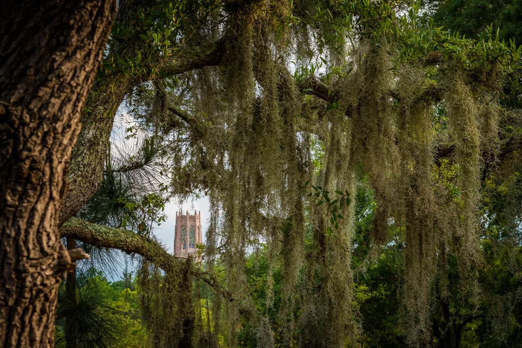 Bok Tower (242 of 313)