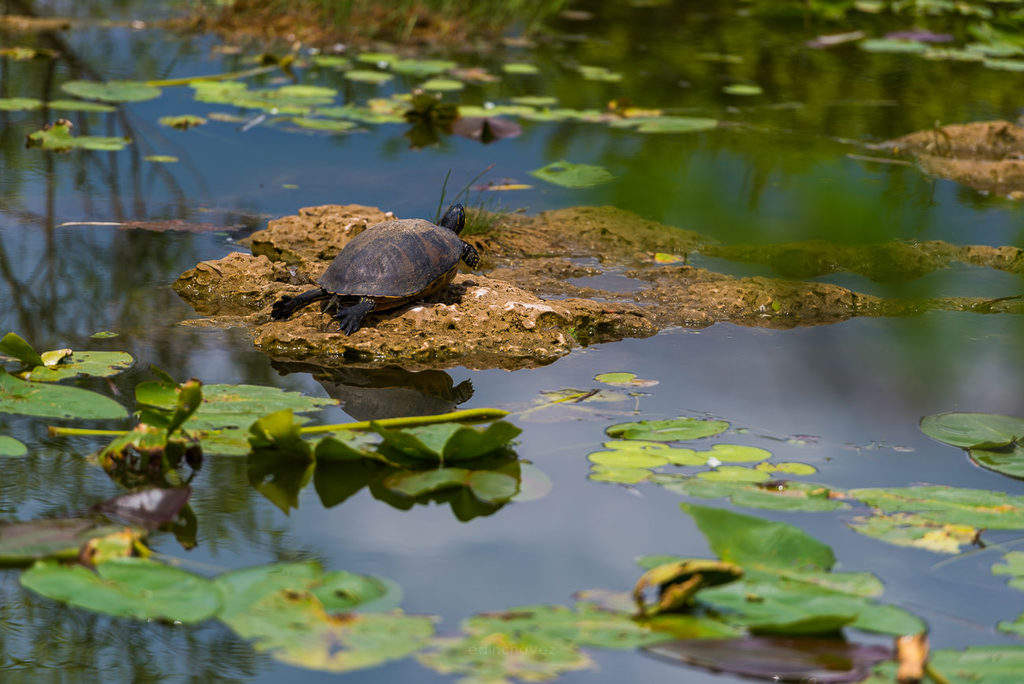 Wild life photography at the everglades