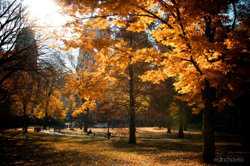 Shot of the Day-Autumn is Here