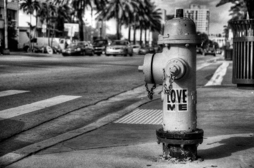 Shot of the Day-Love Me