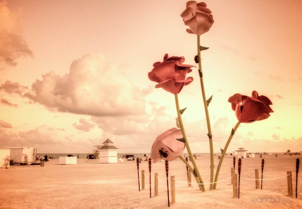 Shot of the Day- Polluted Roses At The Beach
