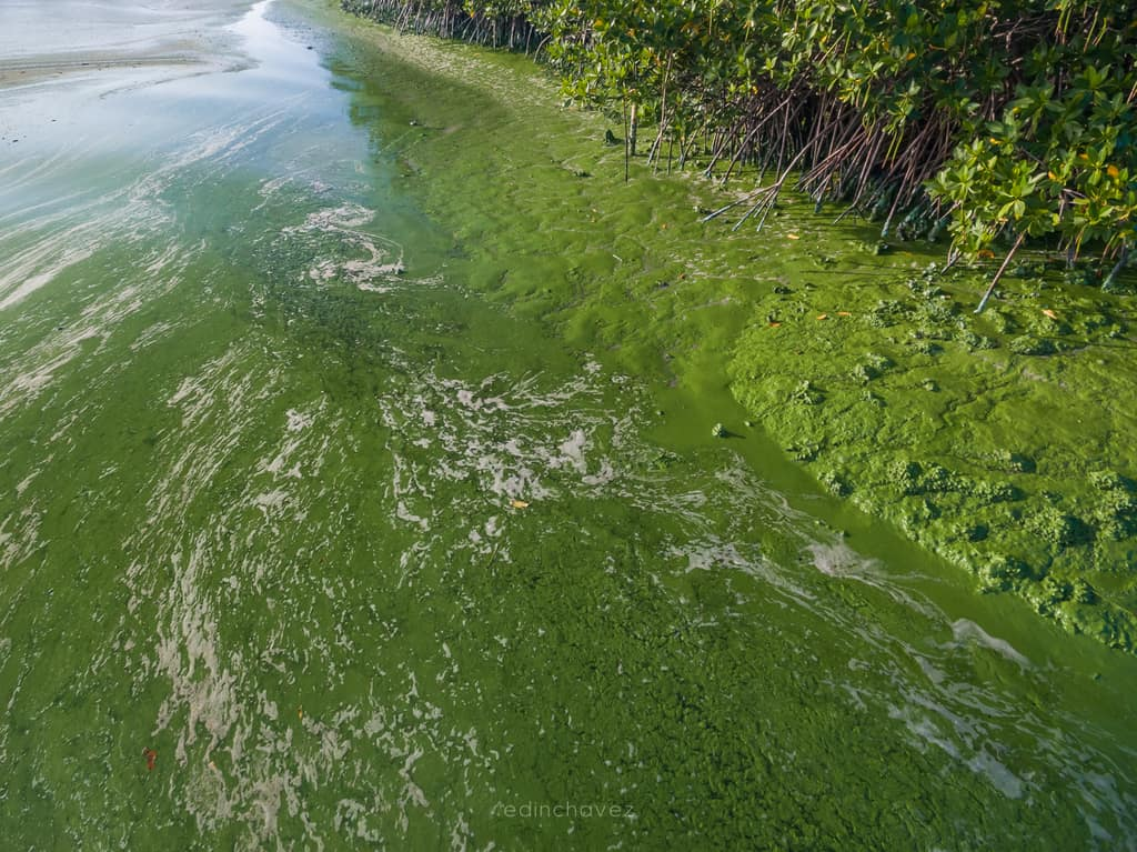 Stuart Florida Toxic Water (158 of 196)-3