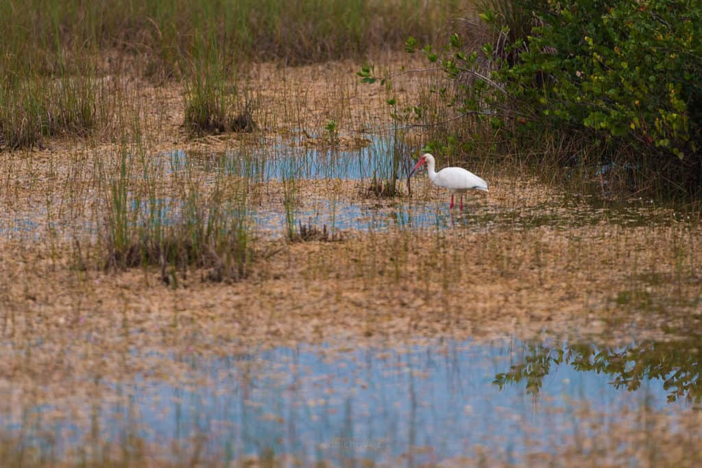 Best wildlife photography at the everglades national park