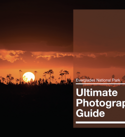 Everglades Photography Guide